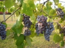 The Winery_28